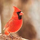 The early bird gets the seed by Penny Fawver