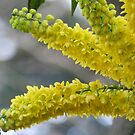 Yellow Flowers by kelly-m-wall