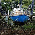 Abandoned in the mangroves by hans p olsen