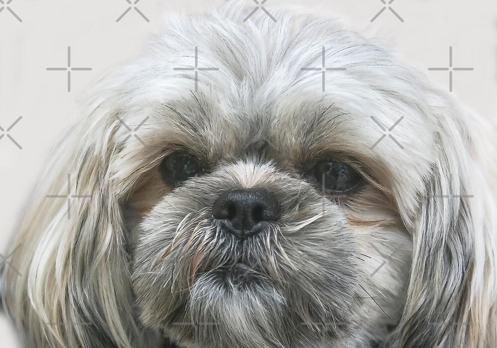 A Shaggy Dog by Heather Friedman