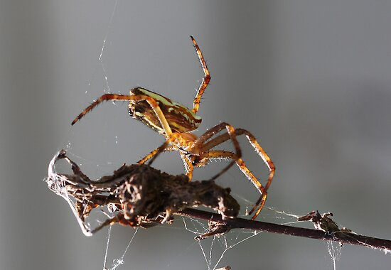 New Rodeo pursuit.. leg ropping spiders... by Elaine Game