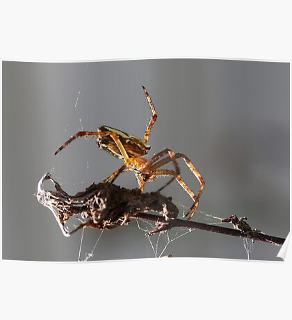 New Rodeo pursuit.. leg ropping spiders... Poster