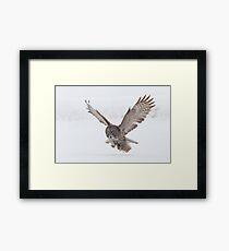 Great Gray Owl. Framed Print