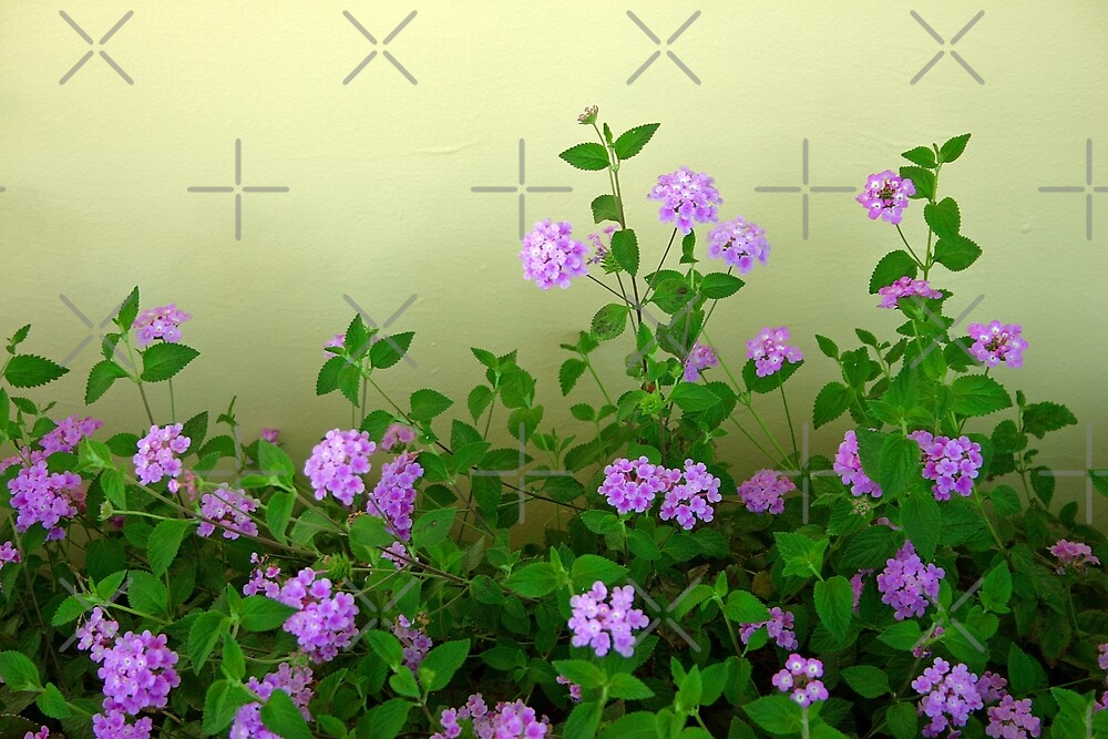 Blooming By The Wall by CarolM