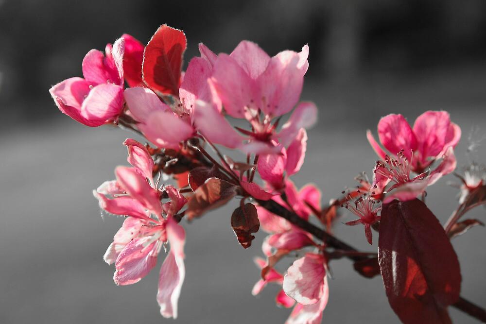 A Splash Of Pink by KatieMay