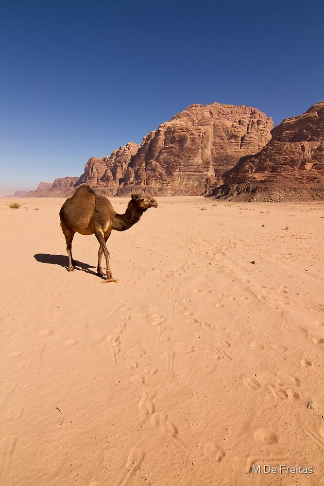 Wadi Rum,Jordan by Miguel De Freitas