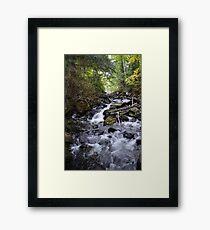 Algonquin Park, Northern Ontario Framed Print