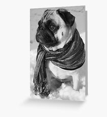 Snow Pug Greeting Card