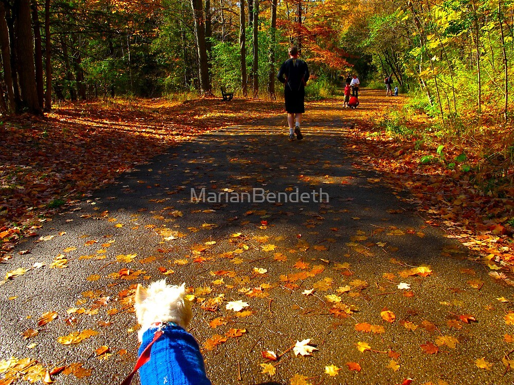 Dog Day afternoons by MarianBendeth