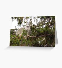 Sunset Hill Snowy Owl: Balancing on a Branch Greeting Card