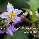 Tomorrow's Flowers by Paula Tohline  Calhoun