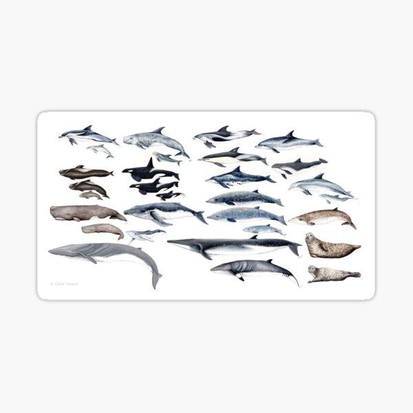 Meeressäugetiere von Europa Sticker