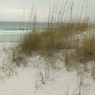 destin beach dunes by craigcal56