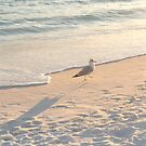 Sea birds near destin fla by craigcal56