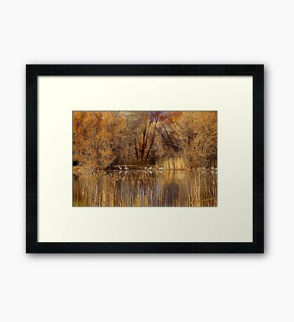 Autumn Relections Framed Print