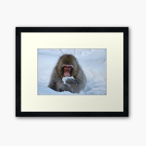 Snowy monkey  Framed Art Print