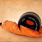 Autumn Leaf by fernblacker