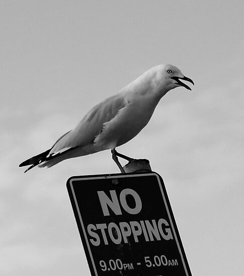 NO STOPPING....OR ELSE!!! by parko