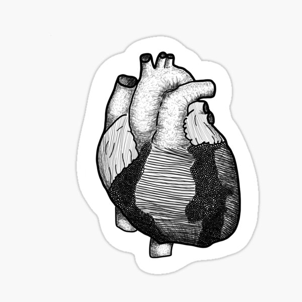 Anatomical Heart Black and White Sticker