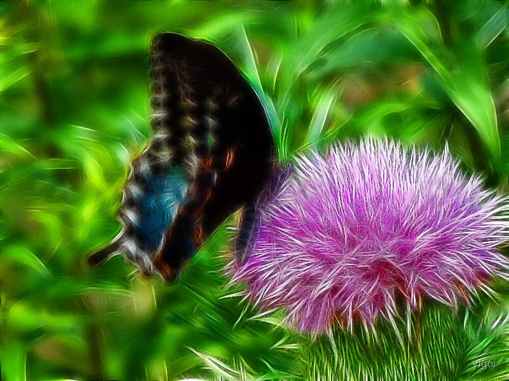 Big Black Butterfly by vigor