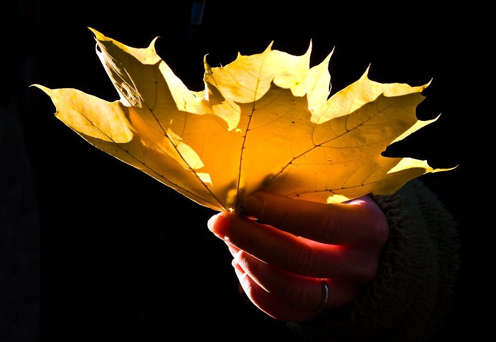 Leaf in Hand by porgif