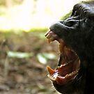 Yawning Chimpanzee  by xomoosexo