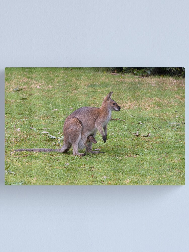 Alternate view of Wallaby with joey Canvas Print