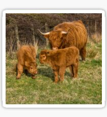 Highland Cow Family Sticker