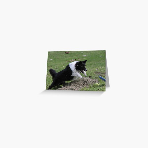 Border Collie Pouncing Greeting Card