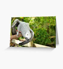 Dancing African Grey Greeting Card
