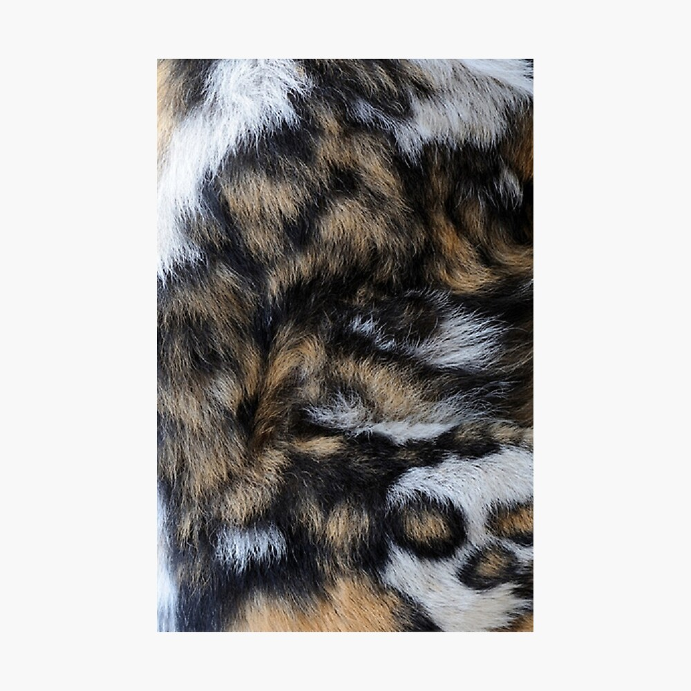 African wild dog fur photographic print by chevym14 redbubble