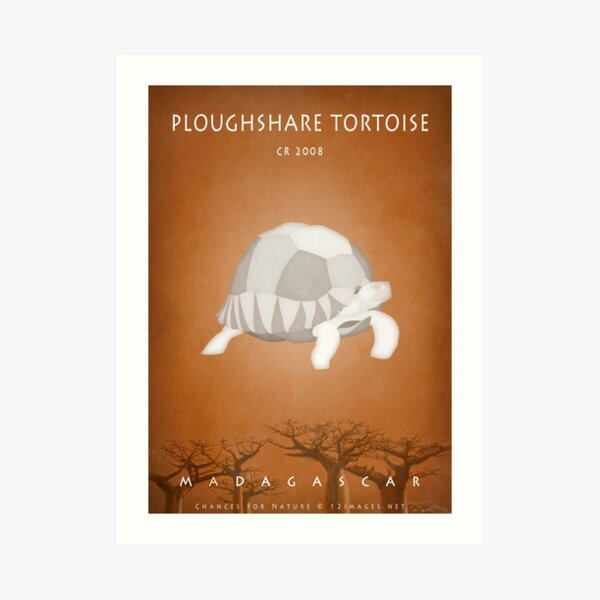 Ploughshare tortoise Madagascar wildlife Art Print