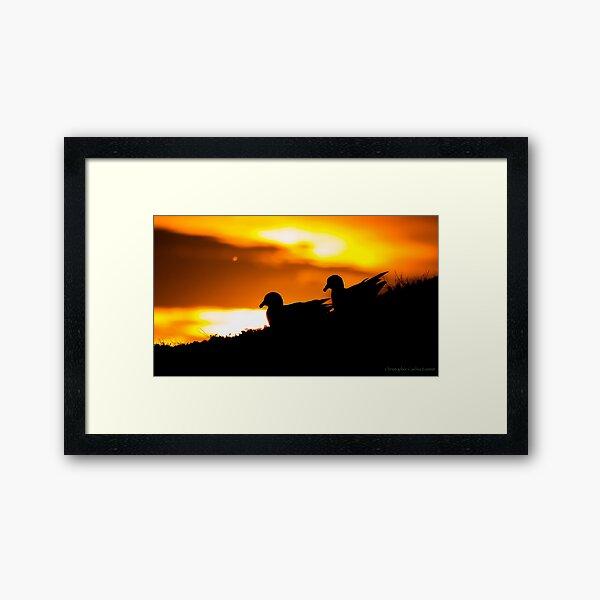 Fulmar Silhouette Framed Art Print