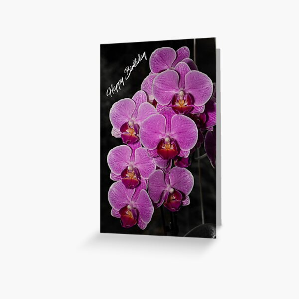 Photographic birthday card of purple orchids Greeting Card