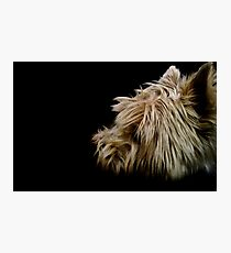 A Shaggy Dog Story Photographic Print