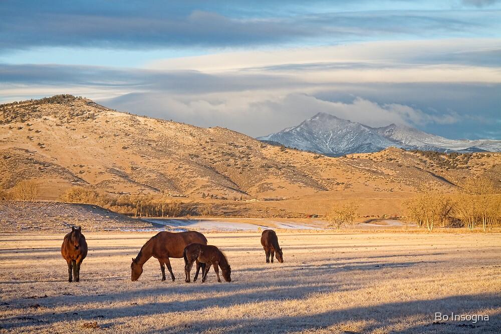 Rocky Mountain Colorado Country Morning by Bo Insogna
