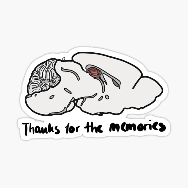 Thanks for the memories - Mouse Brain Hippocampus Sticker