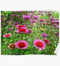 Bee Balm days Poster