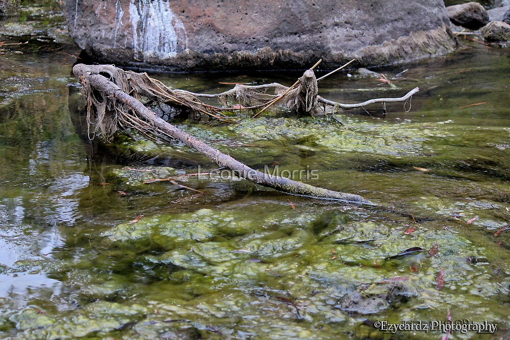 Merri Creek by Leonie Morris