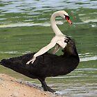 Black Swan by Felfriast