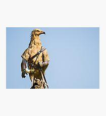 Egyptian Vulture Boromir Photographic Print