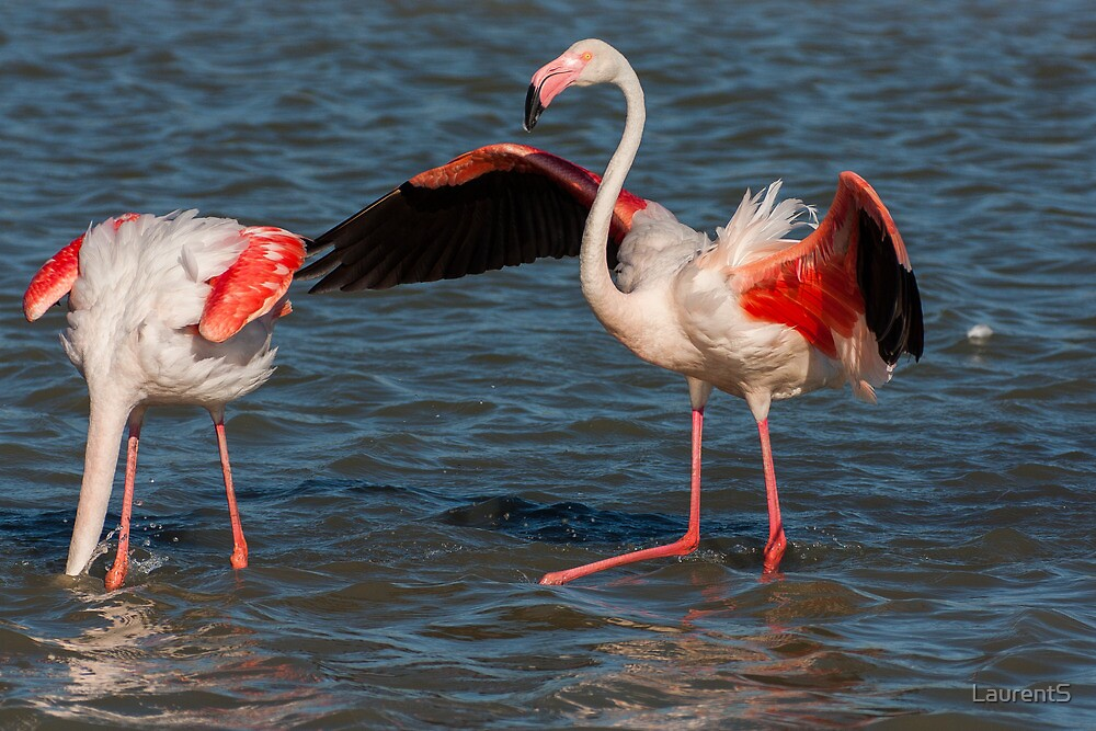 Two flamingo's by LaurentS
