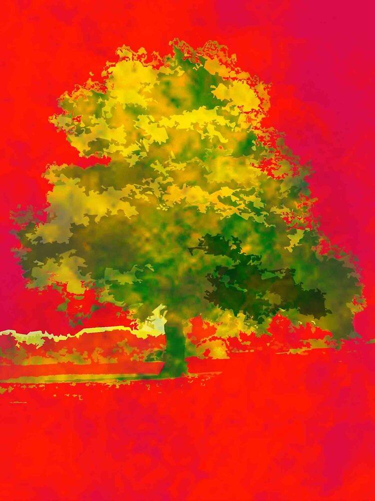 Big Tree by KristaSullivan