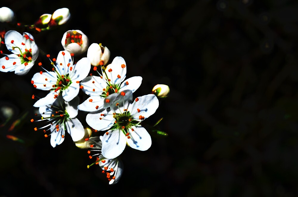 beautiful flower by photography1