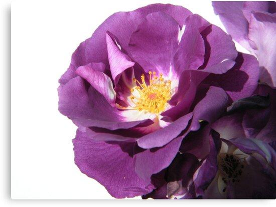 Very Purple by ElsT