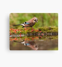 Jay looks at itself in the mirror Canvas Print