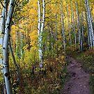 Aspen Trail by Jen Millard
