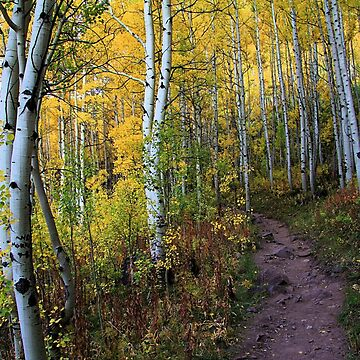 Aspen Trail by jencm