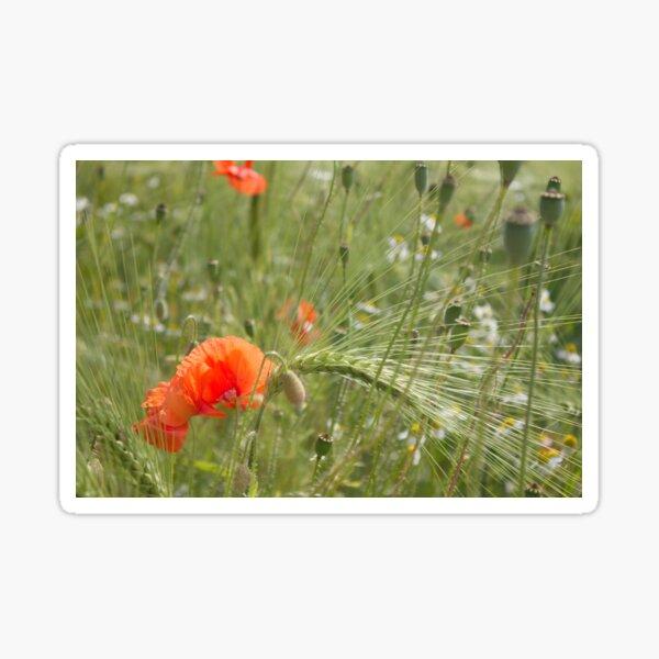 Poppies in the cornfield (2) Sticker