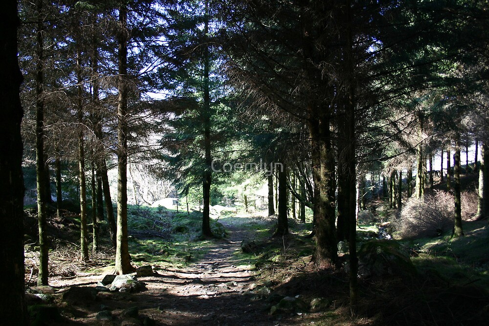 Cumbrian Forest   by Coemlyn